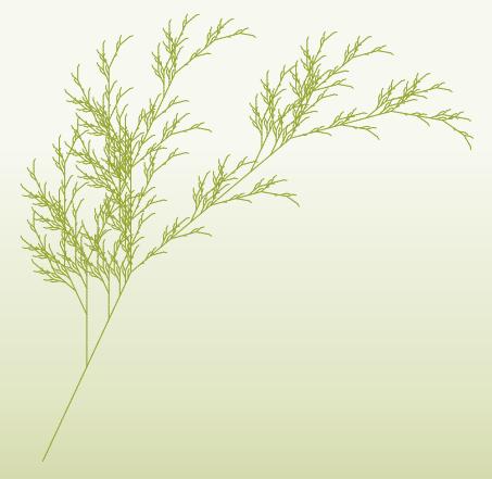 453px-fractal-plantsvg.png