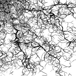 tsr-fractals.jpg