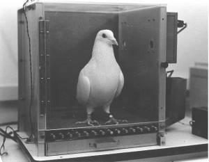 pigeon_skinner_box