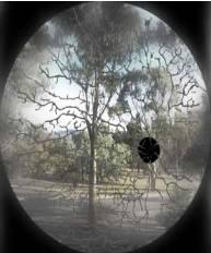 Blind Spot view
